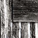 Log Texture by © Joe  Beasley IPA
