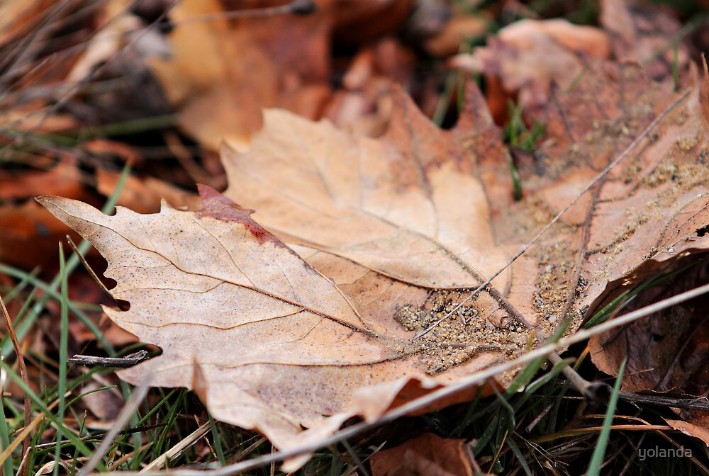 Autumn's End by yolanda