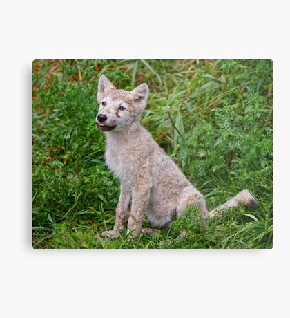 Ready for Obedience Training Metal Print
