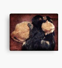 Kitten Cuddle Canvas Print