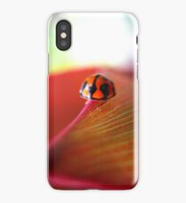 Ladybird on Cordyline iPhone Case iPhone Case