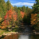 """""""  Berry Creek  """" by fortner"""