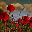 Poppy Field 2 by ajgosling