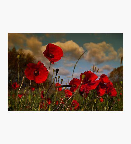 Poppy Field 2 Photographic Print