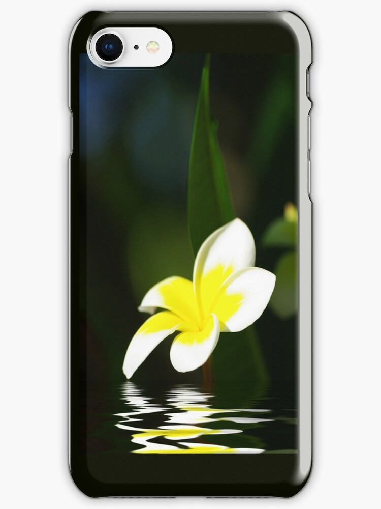 Frangipani in the Water by Rainy