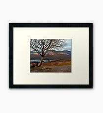 kerry hills Framed Print