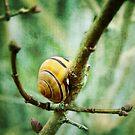 Snail by smilyjay
