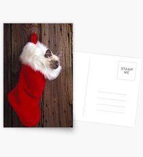 Kitten in stocking Postcards