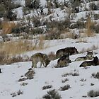 The Pack at Rest by Ken McElroy