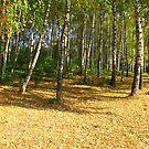 Autumn in Ternopil by TarasKokovsky