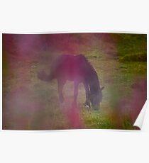 Wonderful Pony feelings .Kabelvåg . Norway . by Brown Sugar . Poster