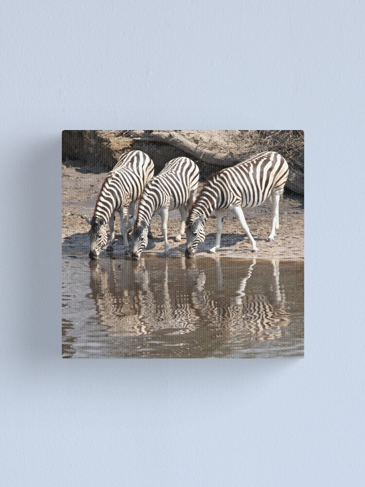Alternate view of Three zebras Canvas Print