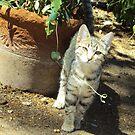 Sweety Cat 2010 by Bearie23