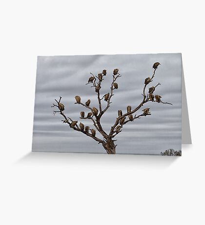 The Answer To How Many Vultures Can Sit On a Tree is... Greeting Card