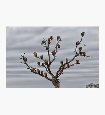 The Answer To How Many Vultures Can Sit On a Tree is... Photographic Print