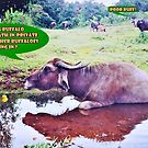 Buff's Private Bath (please see description) by Kanages Ramesh