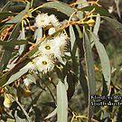 Flinders Ranges by Linda Hitch