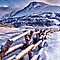 Snowy Fences