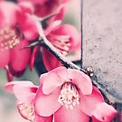 A delicate Spring - iPhone case by Silvia Ganora