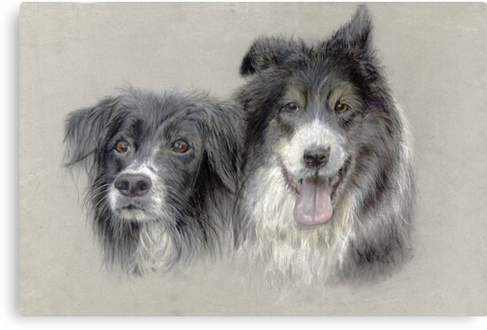 bess and bob border collies by colourpencilsue
