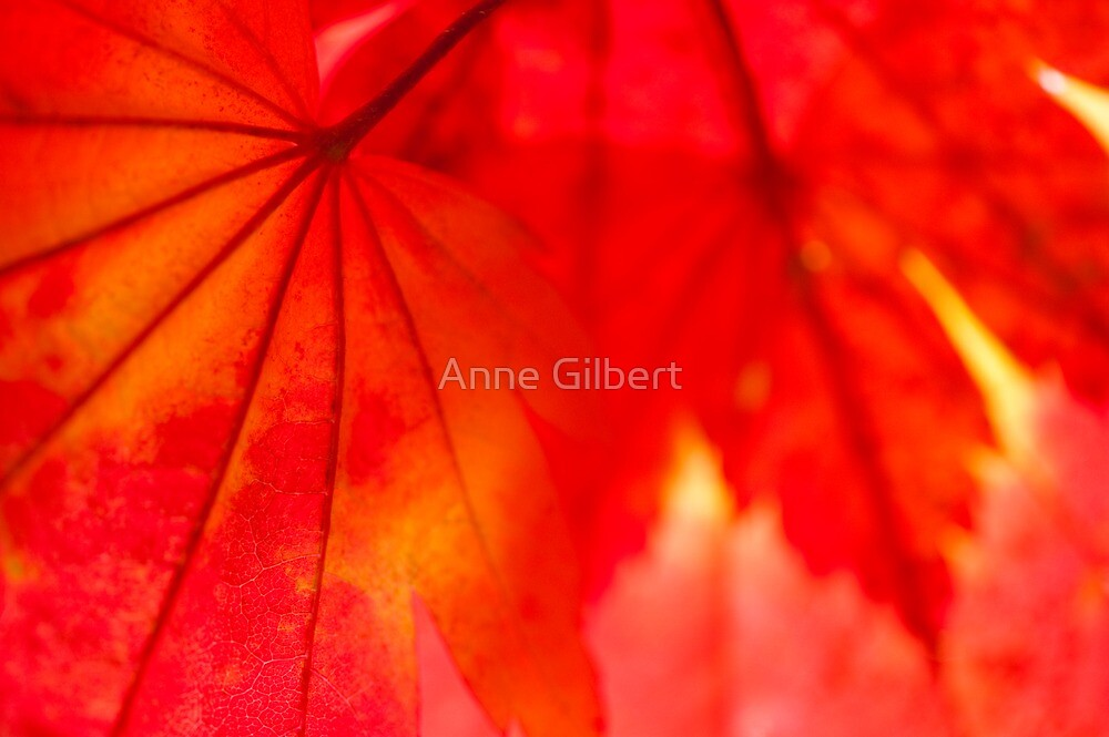 Red Hot by Anne Gilbert