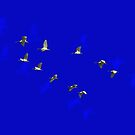 White Ibis In Flight by miroslava