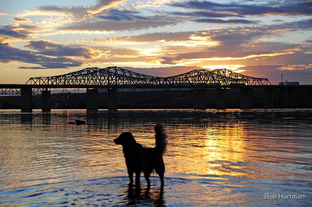 Golden {Retriever} Sunset by Bob Hortman