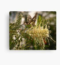 Tambo fly bush Canvas Print