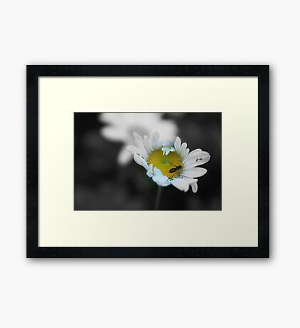 Crunch Framed Print