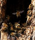 Flying Into The Hive by Betsy  Seeton