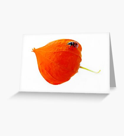 You light up my life... Greeting Card