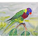 Rosella parrot by Paul Gilbert
