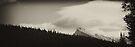 Banff Beauty: The Forests of Mt. Norquay by Ryan Davison Crisp
