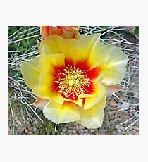Prickly Pear Yellow Bloom  Photographic Print