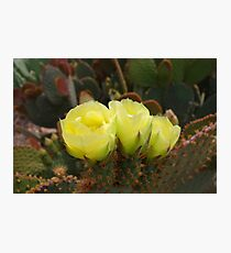 Prickly Pear Trio  Photographic Print