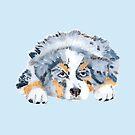 Australian Shepherd Blue Merle Puppy by Barbara Applegate