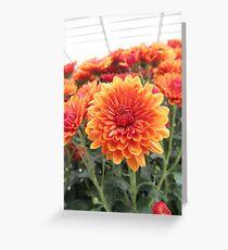 Fiery Flower Greeting Card