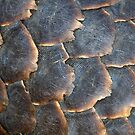 Pangolin Scales by Michael  Moss