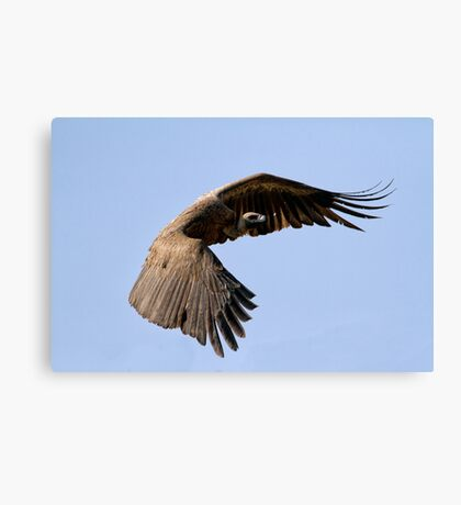 I Am Much Better Looking In Flight Canvas Print