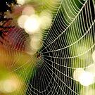 Colored Web by Rebecca Lefferts