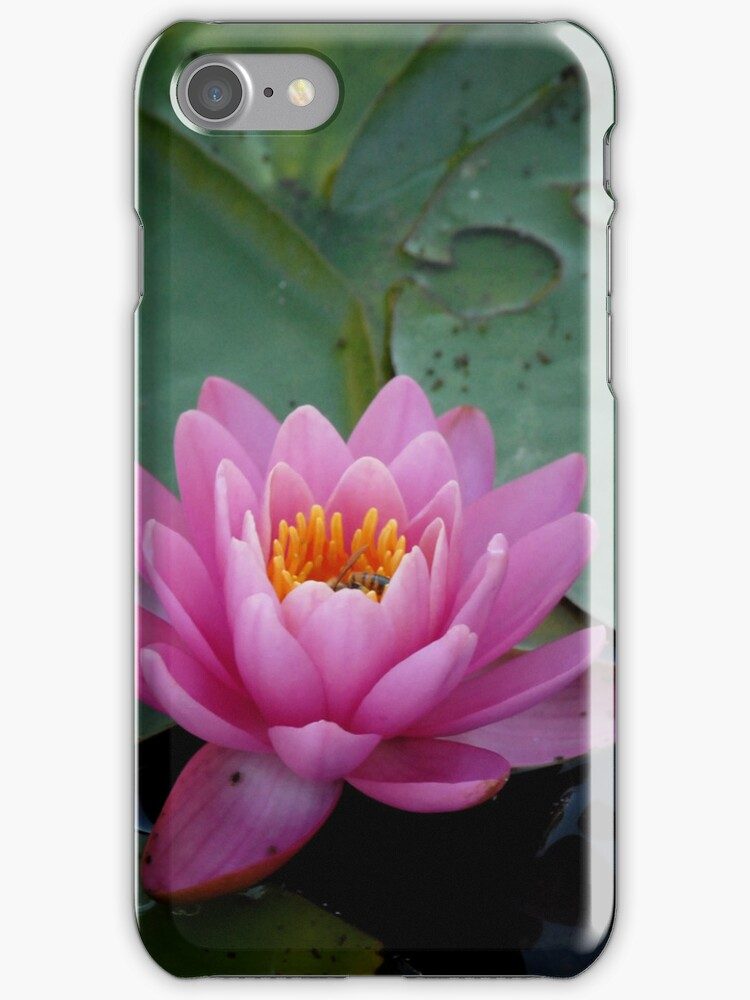 Pink Waterlily - iPhone Case by Colleen Drew