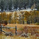 High Country Magic by Barb Miller