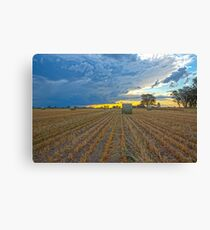 Oaten Hay .. Evening Light. Canvas Print