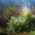 Grass Along Cloe Lake by teresa731