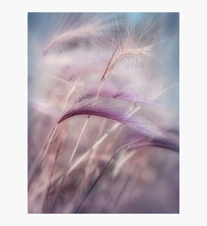 whispers in the wind Photographic Print