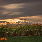 Fall Cornfields at dusk by Linda Storm