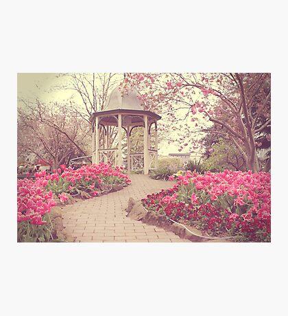 Corbett Gardens, Bowral Photographic Print