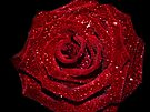 Sparkling Rose by Denise Abé