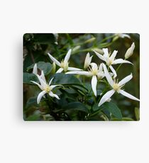 Anniversary Honeysuckle  Canvas Print