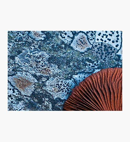 Red on blue Photographic Print
